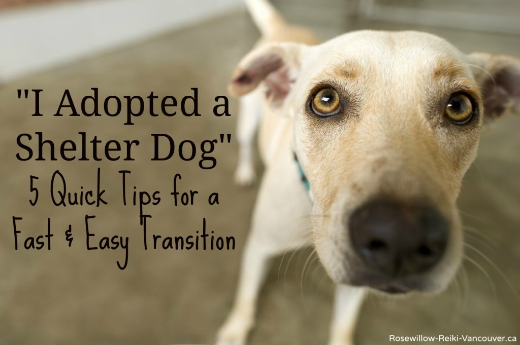 Rosewillow Reiki for Shelter Dogs. 5 quick tips to ease the transition