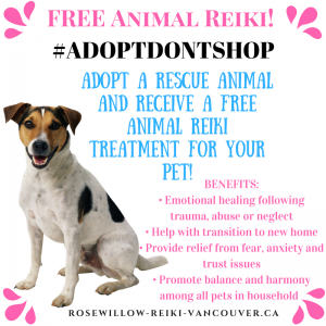 Rosewillow Reiki Animal Reiki Willow Mainprize