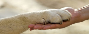 Animal Reiki, Animal Reiki Training, Animal Reiki Certification, Reiki Training, Animal Reiki Classes,